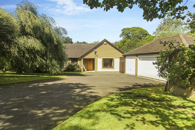 Thumbnail Bungalow for sale in Oaklands Rise, Riding Mill, Northumberland