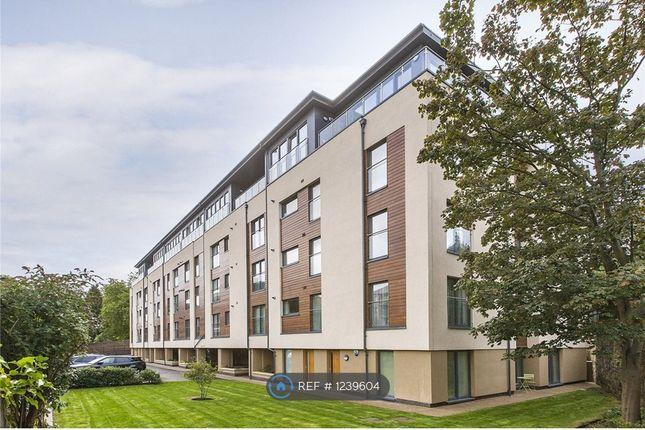 Thumbnail Flat to rent in Ravelston Terrace, Edinburgh