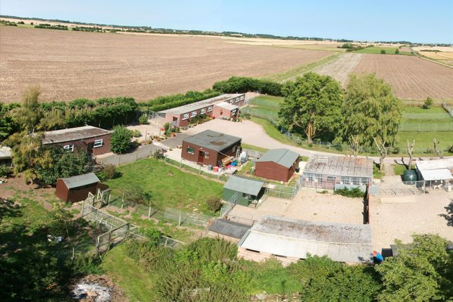 Thumbnail Property for sale in Kennels, Cattery & Equestrian Businesses LN11, Grainthorpe, Lincolnshire