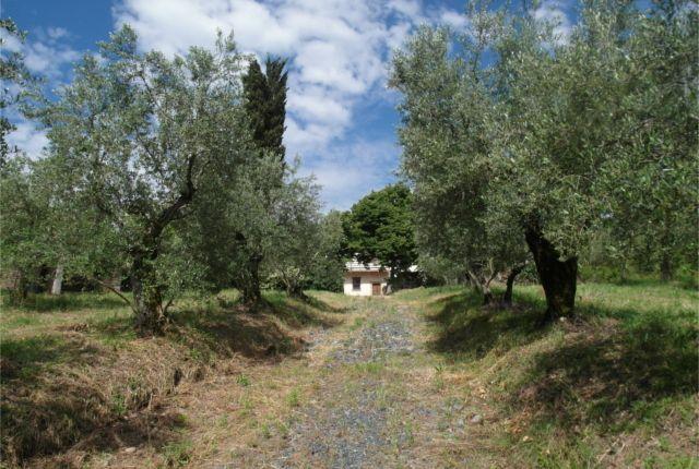 The Driveway of Casale Meraviglia, Anghiari, Arezzo, Tuscany, Italy