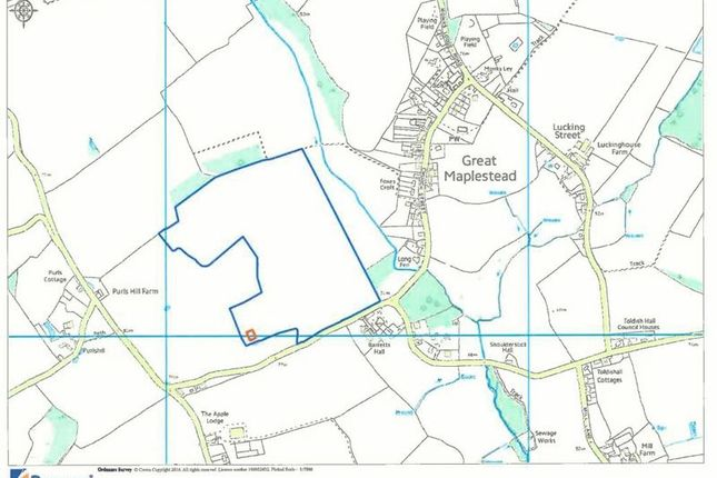 Thumbnail Land for sale in Great Maplestead, Halstead