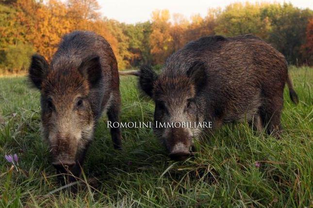 Thumbnail Farm for sale in Maremma, Tuscany, Italy