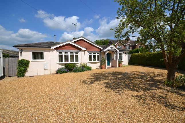 Thumbnail Detached bungalow for sale in Holly Drive, Old Basing, Basingstoke