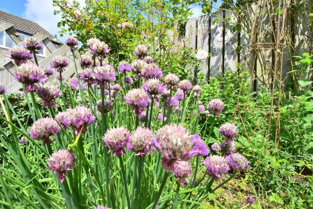 Chives Growing In The Garden