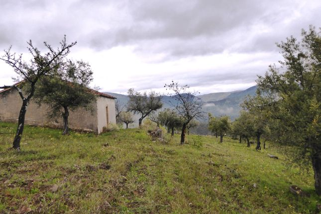P622, Olive Grove With A House In Upper Douro, Portugal