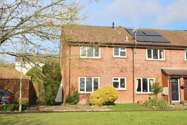 Thumbnail Semi-detached house to rent in Appledown Close, Alresford