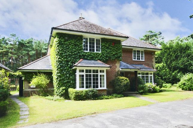 Thumbnail Detached house to rent in St Leonards, Ringwood