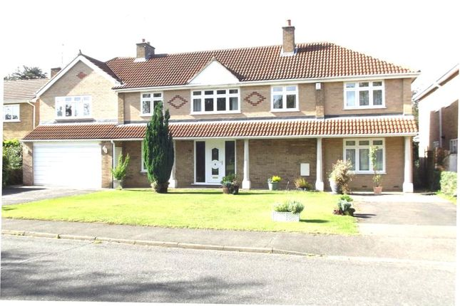 Thumbnail Detached house for sale in Thorpe Avenue, Peterborough