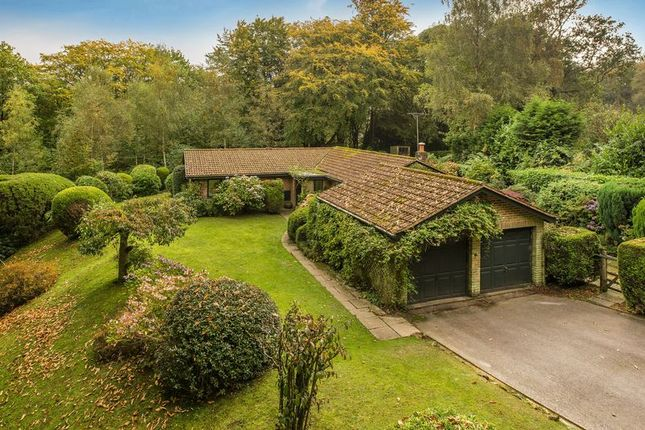 Thumbnail Detached bungalow for sale in Square Drive, Haslemere