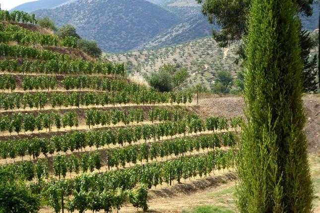 Thumbnail Farm for sale in 245Ha Farm In The Upper Douro, Portugal, Vila Nova De Foz Côa, Guarda, Central Portugal