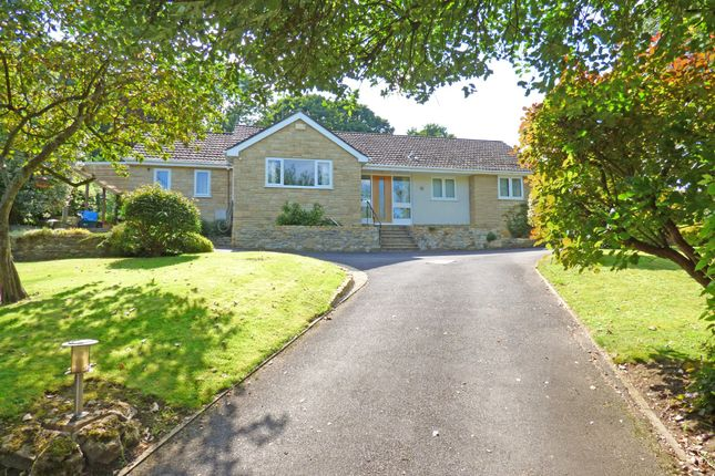 Thumbnail Detached bungalow for sale in Old Hill, Whitehall, Wincanton