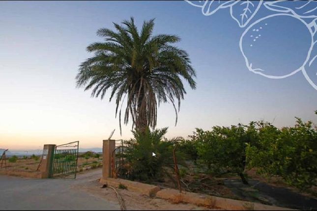 Thumbnail Land for sale in Algorfa, Algorfa, Spain