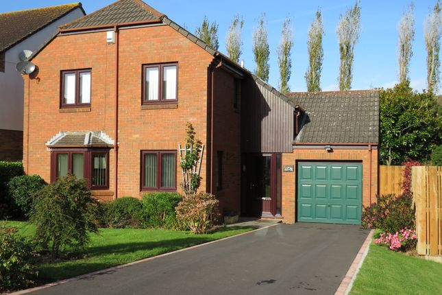 Thumbnail Detached house for sale in Home Meadow, Minehead