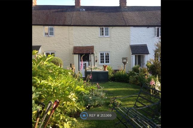 Thumbnail Terraced house to rent in Grove Place, Alcombe