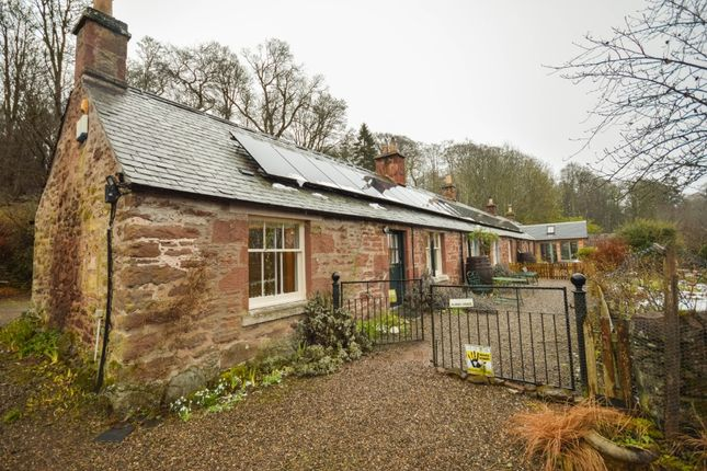Thumbnail Semi-detached house to rent in Littleton Of Airlie, Kirriemuir, Angus