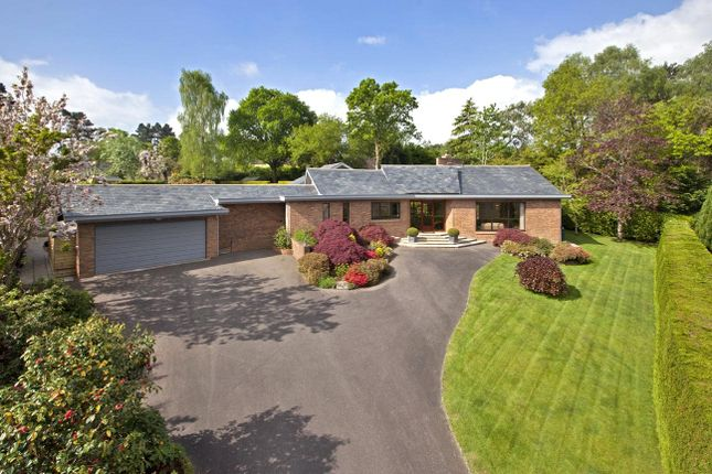 Thumbnail Bungalow for sale in Ford Lane, West Hill, Ottery St. Mary