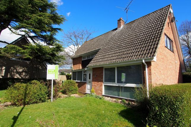 Thumbnail Property for sale in High Green, Norwich