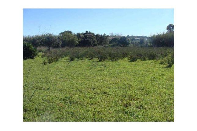 Land for sale in Algoz E Tunes, Algoz E Tunes, Silves