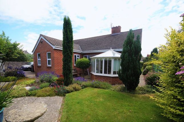 Thumbnail Detached bungalow for sale in North Road, Wookey, Wells