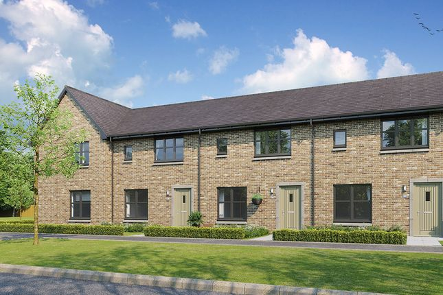 """3 bed terraced house for sale in """"Berwick"""" at Hunter's Meadow, 2 Tipperwhy Road, Auchterarder PH3"""
