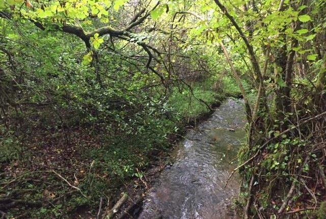 Img_2890 of North Buckland, Braunton EX33