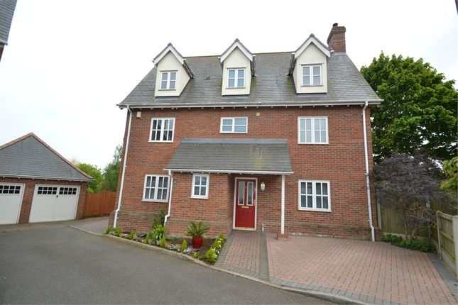 Thumbnail Detached house for sale in Ely Gardens, Colchester, Essex