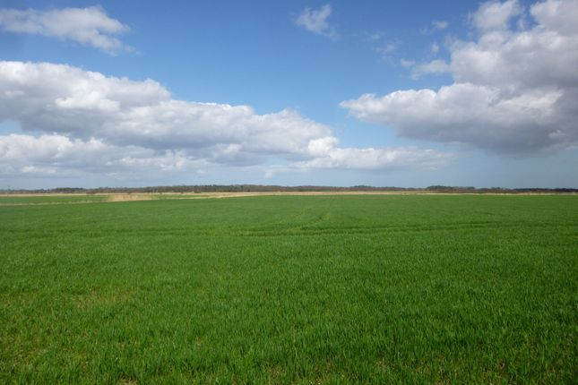 Thumbnail Farm for sale in Off Burgh Road, Wheatacre, Beccles