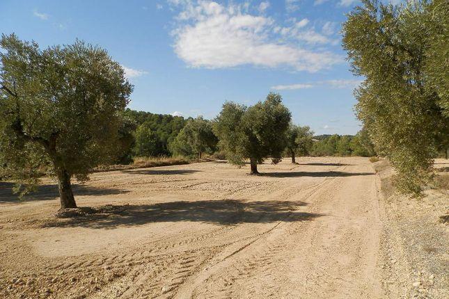 Ancient Terraces of Parcello 31 Poligono 8, Arens De Lledo, Mattarrana, Spain, Mattaranna SA38 9As, Spain