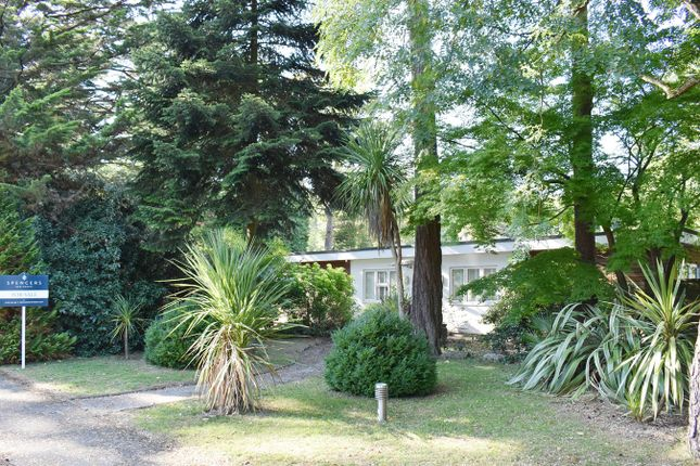 Thumbnail Bungalow for sale in St Ives Wood, St Ives, Ringwood