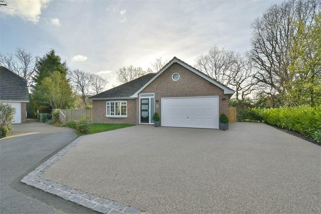 Thumbnail Detached bungalow for sale in Holland Avenue, Bexhill-On-Sea, East Sussex
