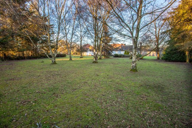 Thumbnail Land for sale in The Street, Raydon, Ipswich