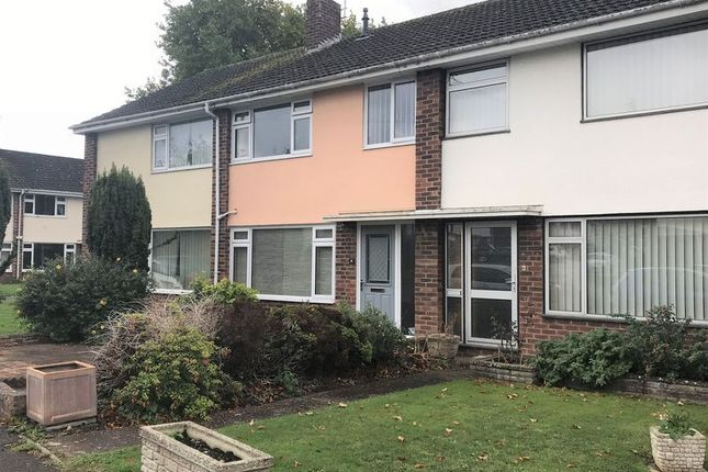 Thumbnail Terraced house to rent in Spencer Avenue, Taunton