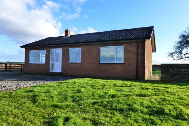 Thumbnail Bungalow to rent in Hutton Conyers, Ripon
