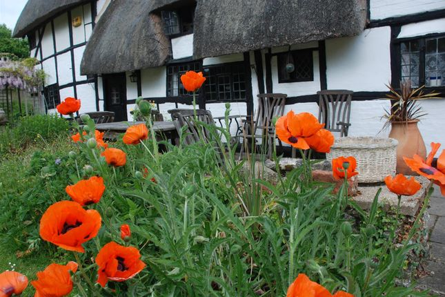 Poppies of North End Road, Steeple Claydon, Buckingham, Buckinghamshire MK18