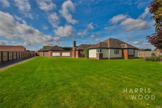 Thumbnail Bungalow for sale in Great Tey Road, Little Tey, Colchester