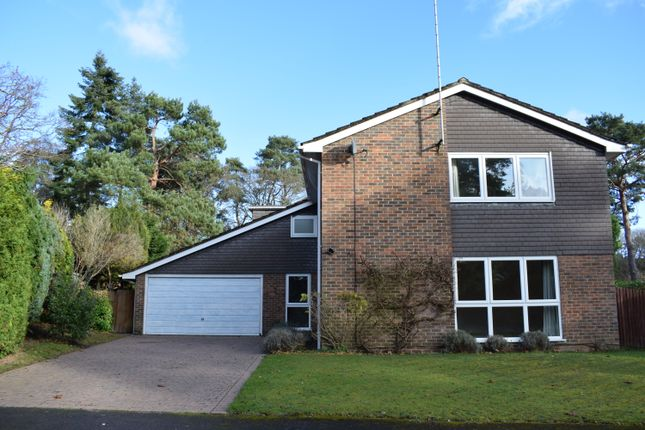 Thumbnail Detached house to rent in Bourne Firs, Lower Bourne, Farnham, Surrey