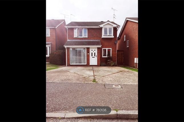 Thumbnail Detached house to rent in Greenacres, Clacton-On-Sea