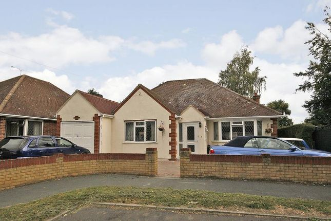 Thumbnail Detached bungalow to rent in Little Orchard, Woodham