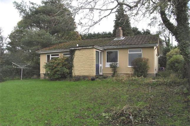 Thumbnail Detached bungalow to rent in Cuckoo Lane, Winsham, Chard, Somerset