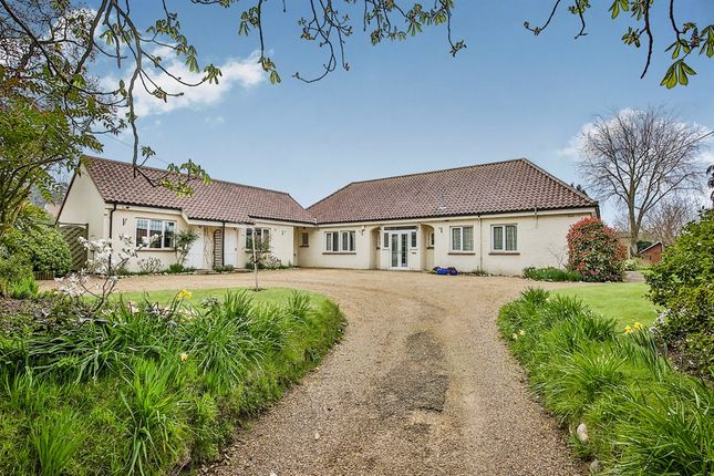 Thumbnail Detached bungalow for sale in Strumpshaw Road, Brundall, Norwich
