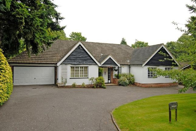 Thumbnail Detached bungalow to rent in Bridle Lane, Loudwater, Rickmansworth