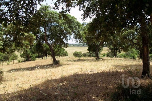 Thumbnail Land for sale in Vale Da Pedra, Cartaxo, Santarém