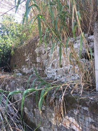 The Stone Wall That Separates Plot 1 From Plot 2.