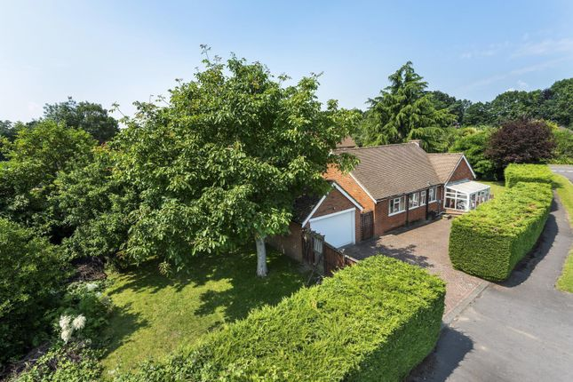 Thumbnail Detached bungalow for sale in Chobham Road, Ottershaw