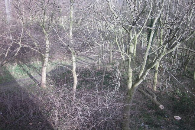 Woods of Colley Drive, Ecclesfield, Sheffield S5