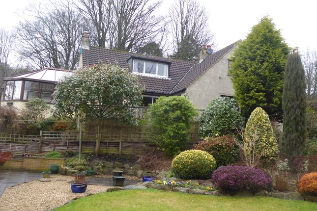 Thumbnail Bungalow for sale in Whitelands Road, Shipley