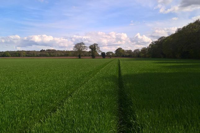 Thumbnail Farm for sale in At Norwich Road, Salhouse, Norwich