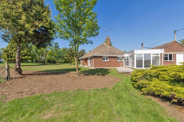 Thumbnail Detached bungalow to rent in Lynsted, Sittingbourne