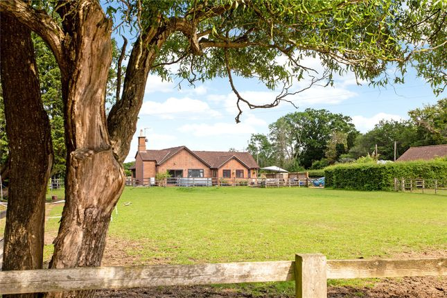 Thumbnail Bungalow for sale in Fisher Lane, Dunsfold, Godalming, Surrey
