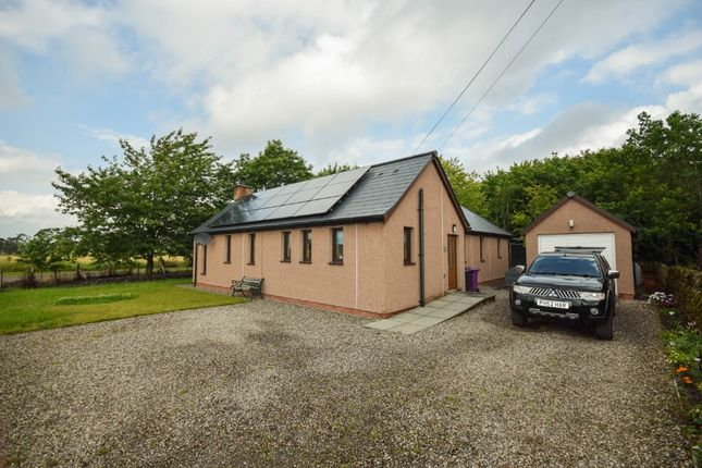 Thumbnail Bungalow to rent in Muirton Of Drumshade, Roundyhill, Kirriemuir, Angus